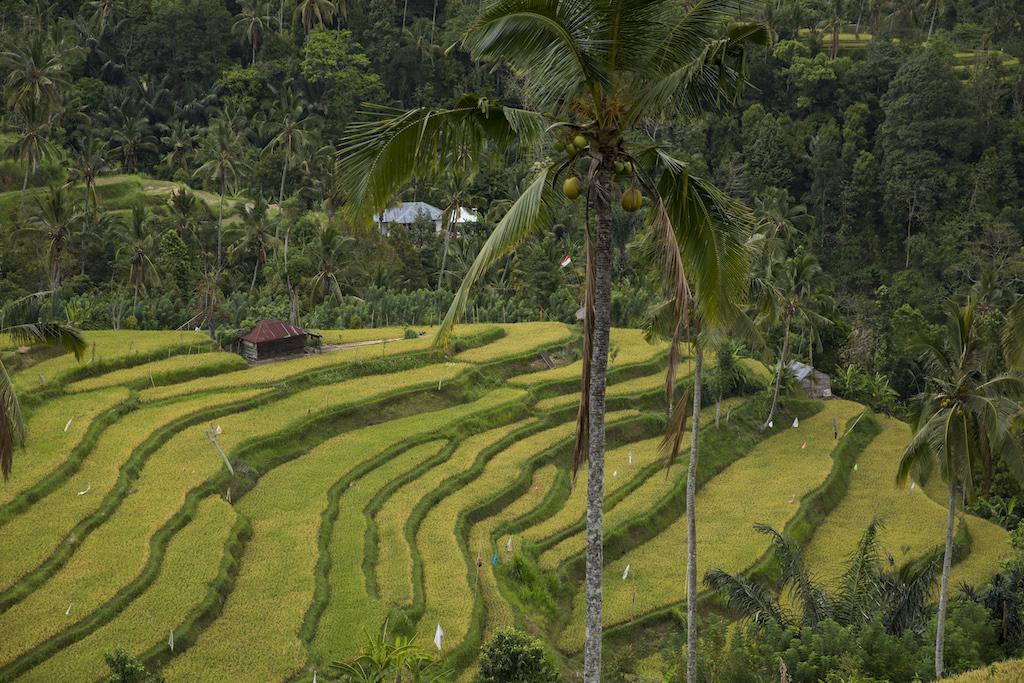 bali-reiseroute-titelbild