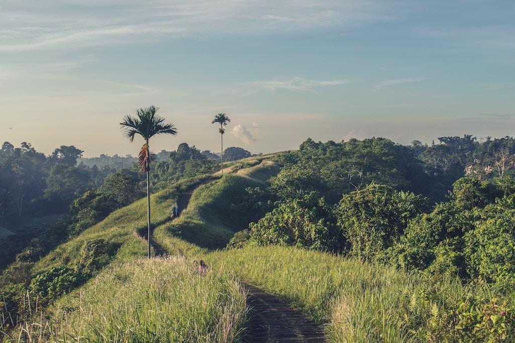 bali-ubud-campuhan ridge walk
