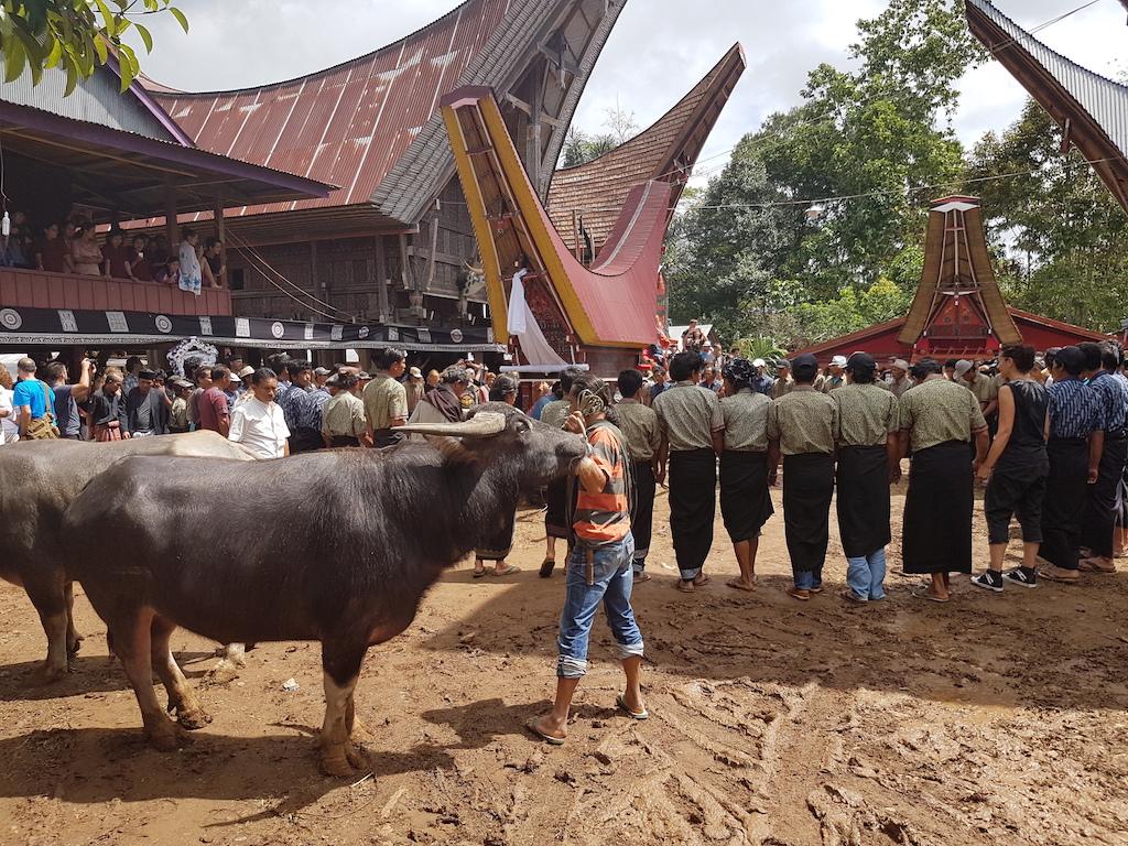 beerdigungszeremonie-tana-toraja