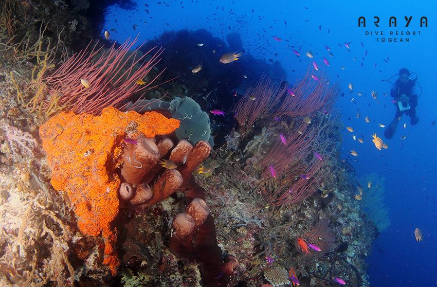 bomba atol-togian-inseln