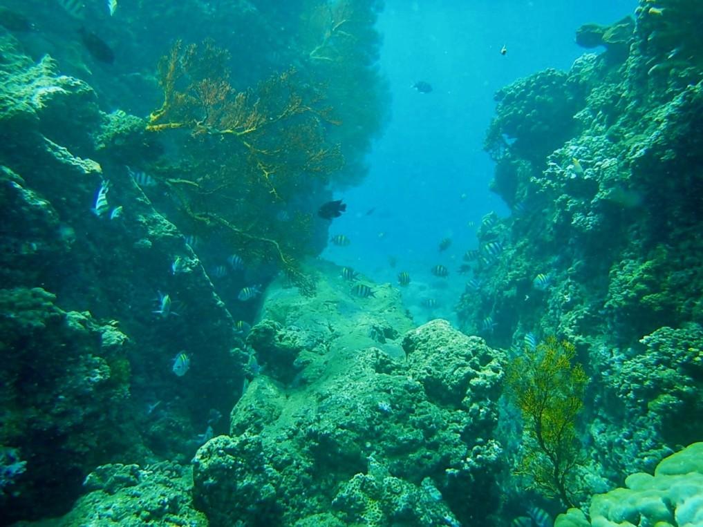coral garden cliffs