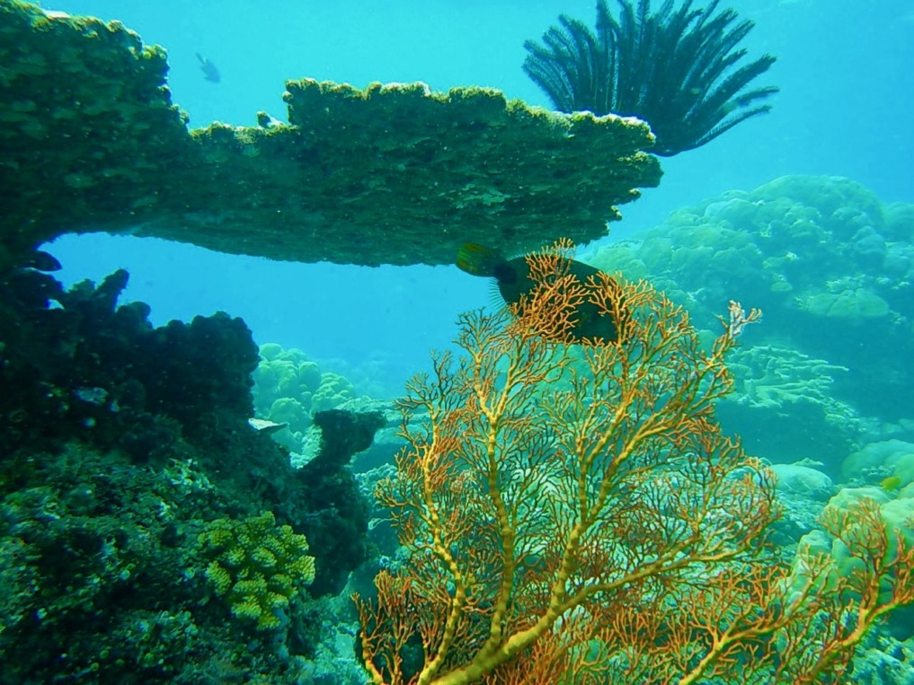coral garden fish