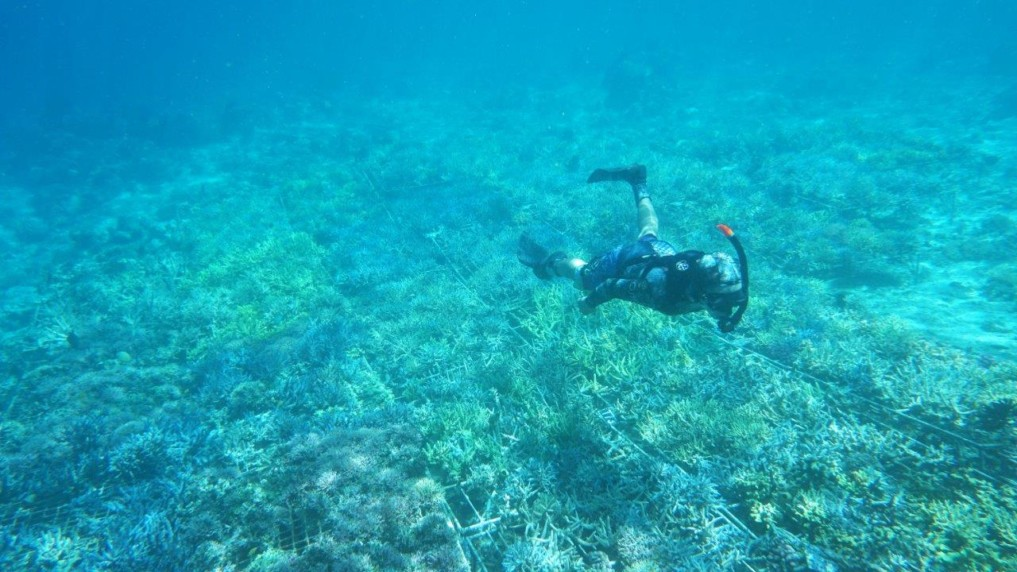 coral-guardian-6