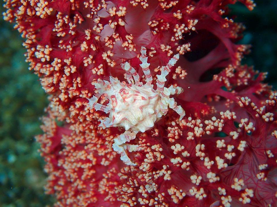 crab-bunaken