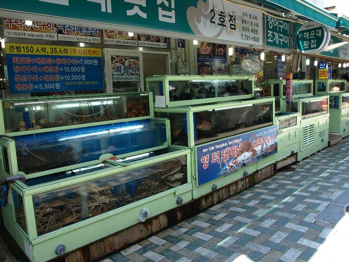 cyanidfischen-tauchen-indonesien