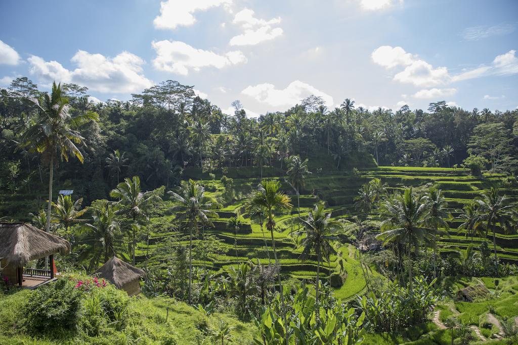 fotomotiv-indonesien-tegallalang