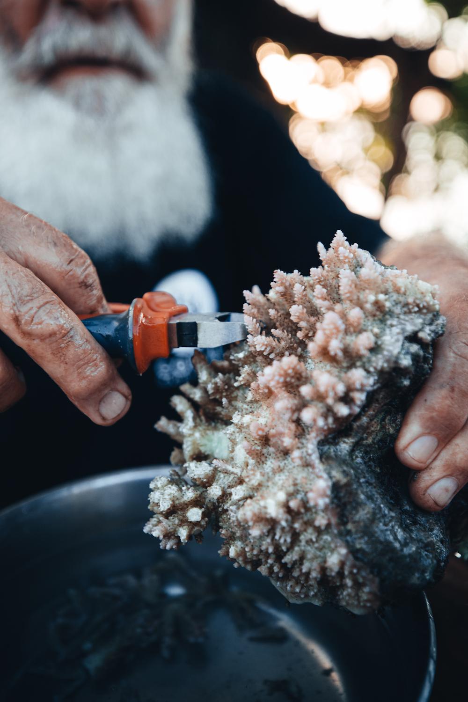 gotback-rucksack-korallen-pflanzen