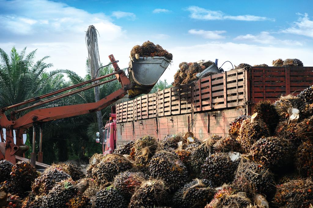 indonesien-palmoel