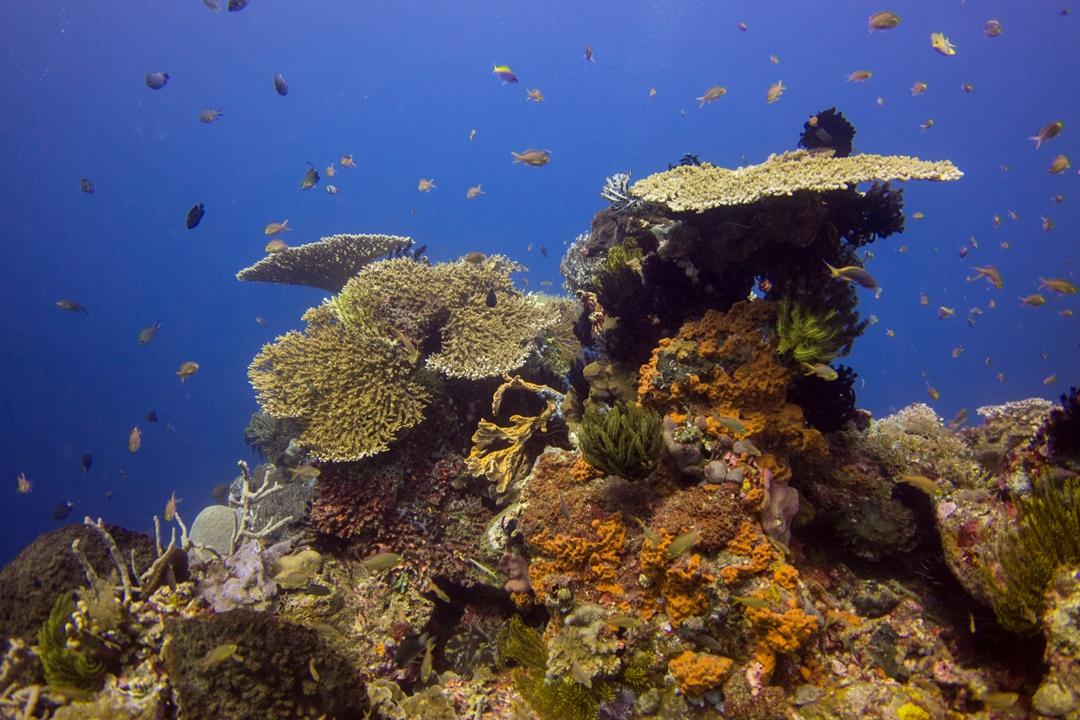 Riffe von Halmahera Tauchen Indonesien