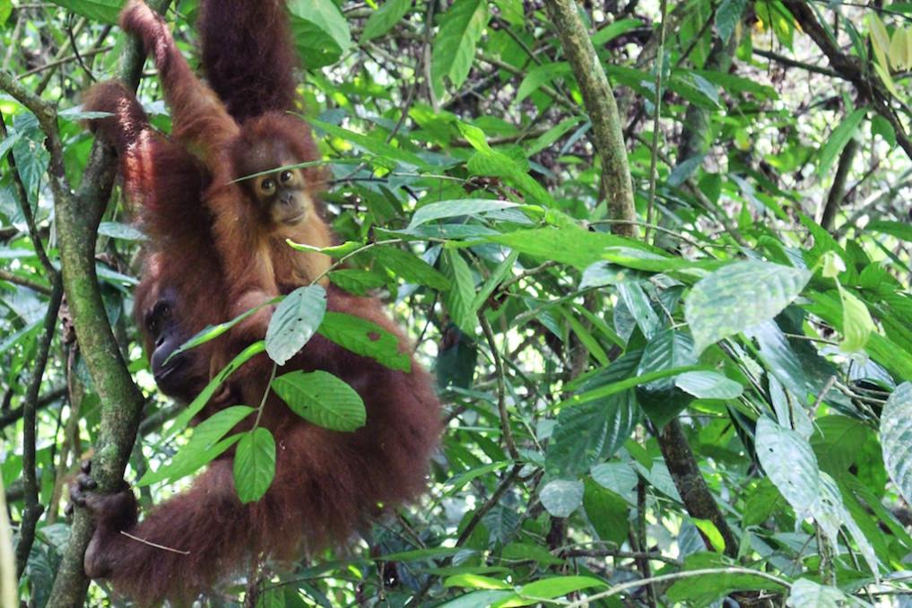 indonesische-insel-sumatra