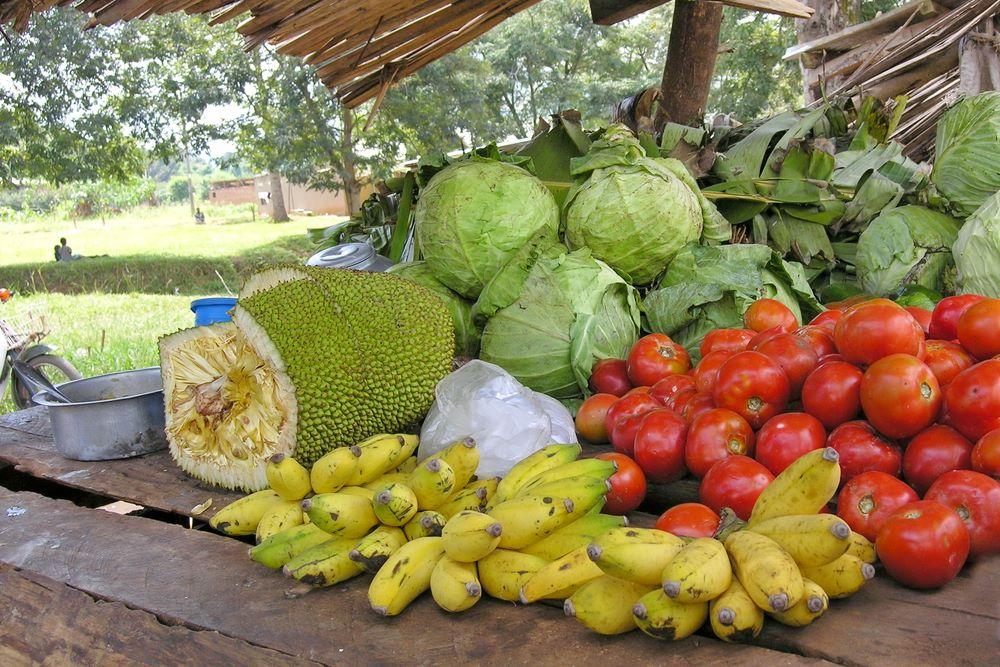jackfrucht-markt