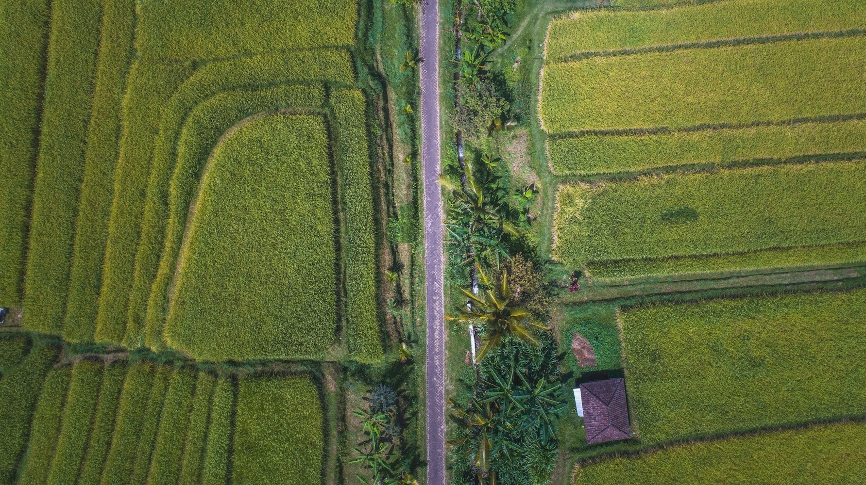jatiluwih-reisfelder-von-oben