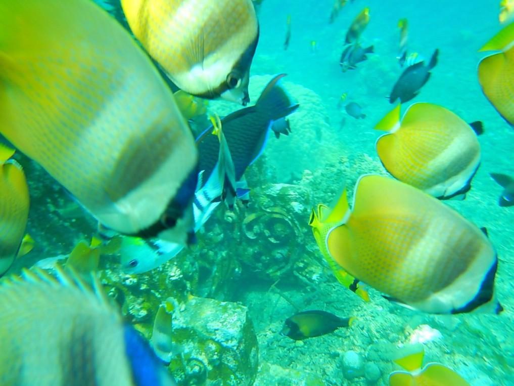 jemeluk bay fish