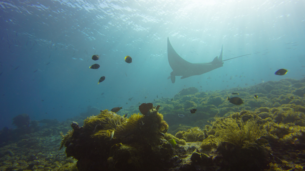 komodo-nationalpark-Manta_Point