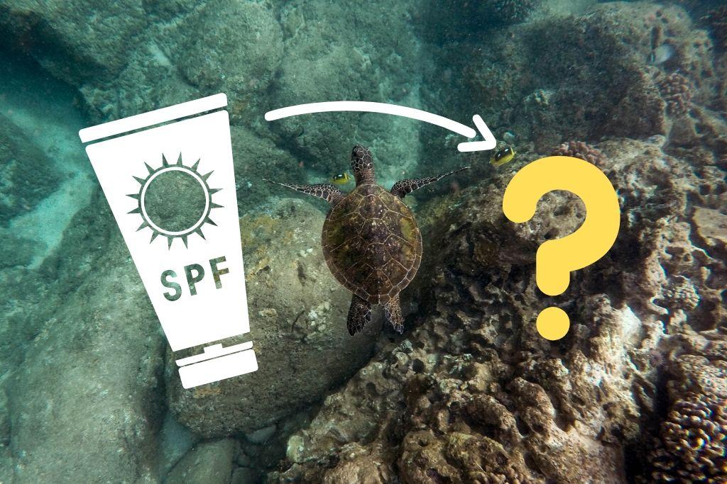 korallen-freundliche-sonnencreme-titelbild