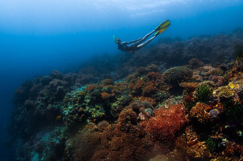 korallenbleiche-1
