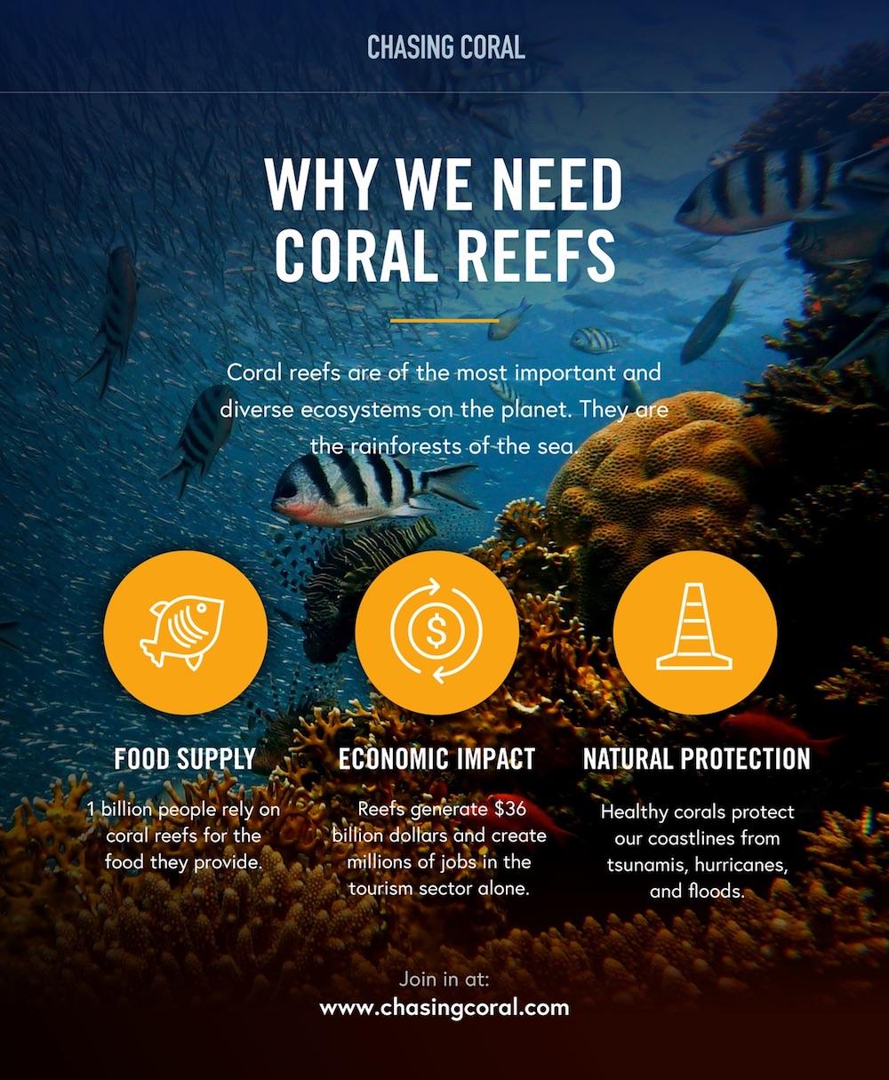 korallenbleiche-2