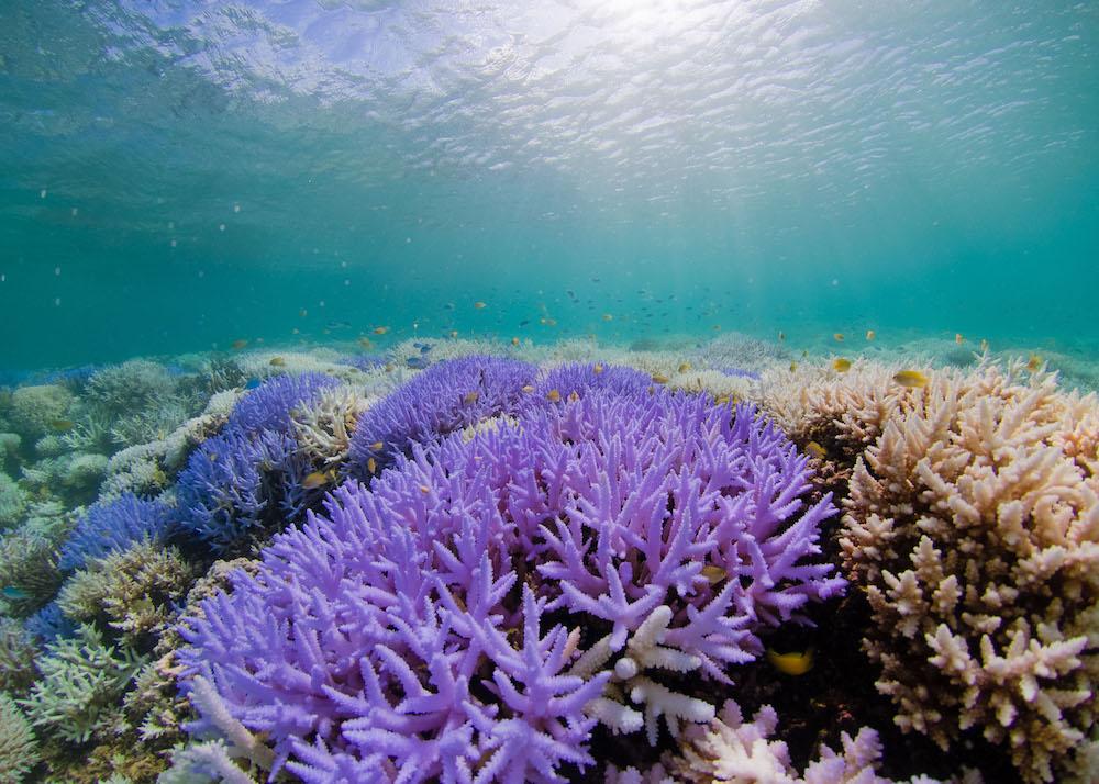 korallenbleiche-ursachen