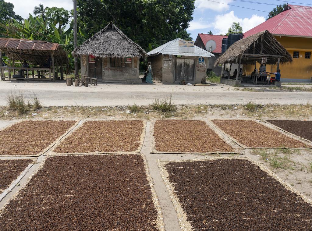 Nelkenzigarette-Indonesien-Kretek