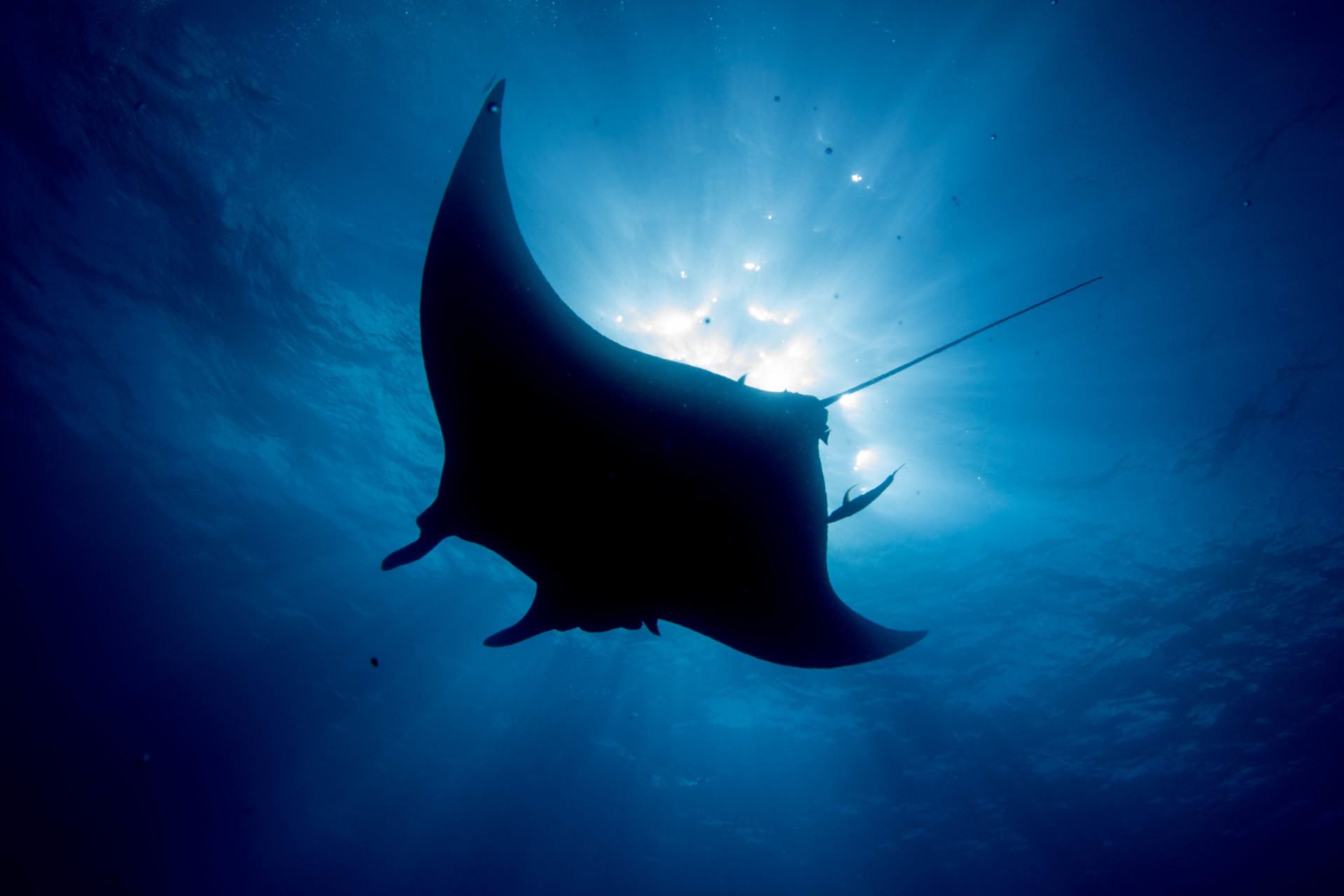 https://indojunkie.com/wp-content/uploads/manta-rochen-indonesien-8.jpg