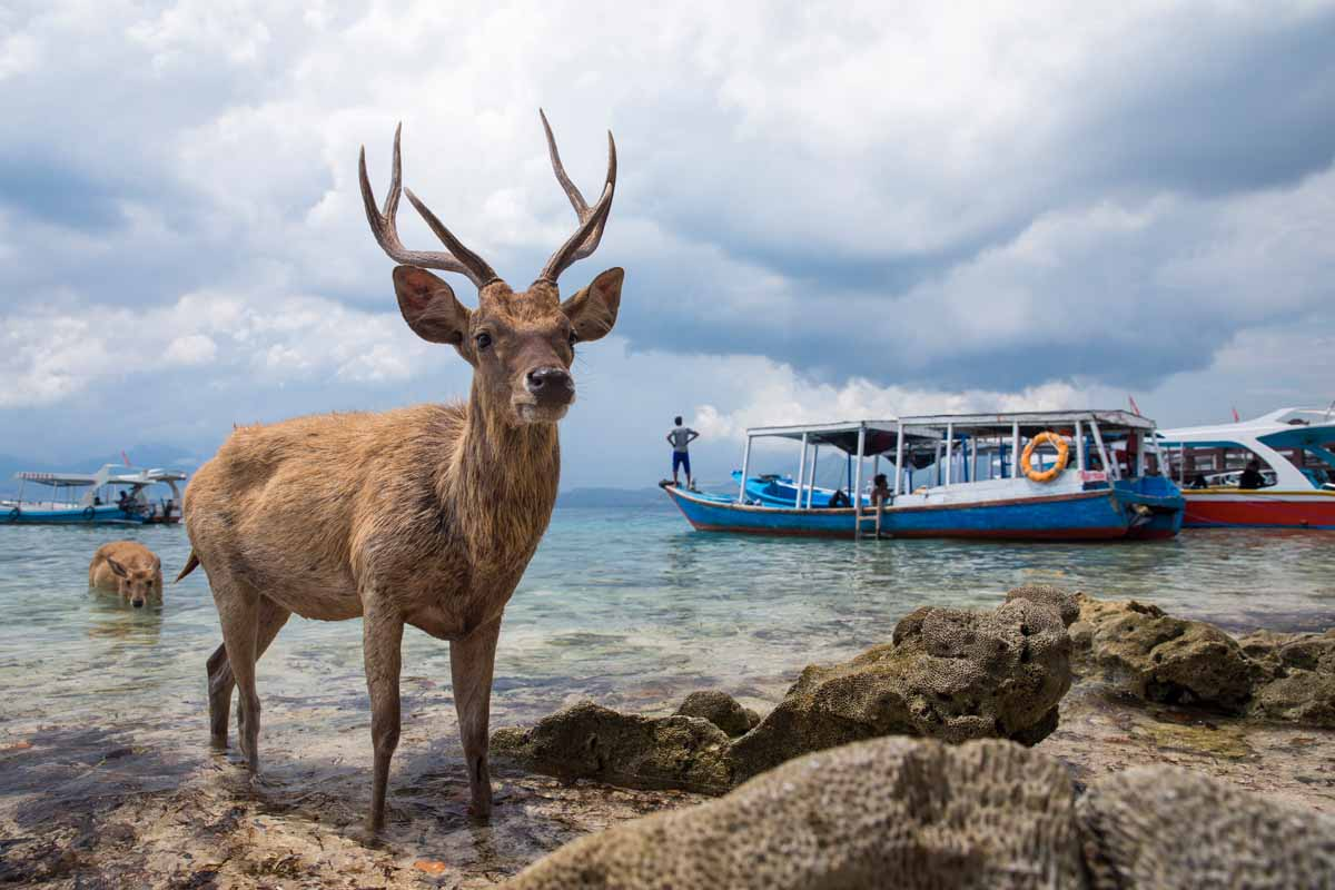 menjangan-island-titelbild