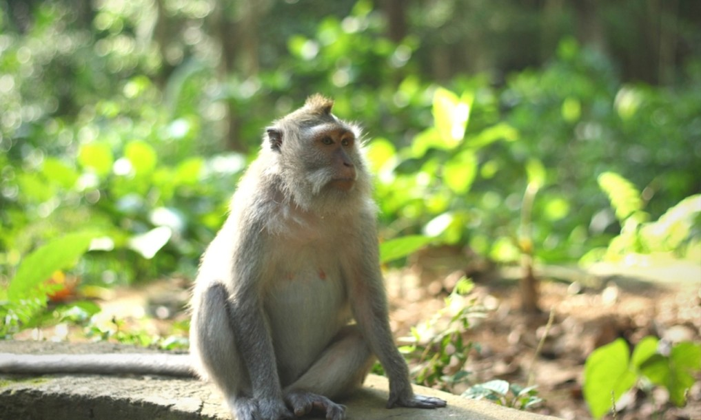 Monkey Forest Ubud 2