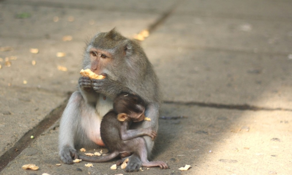 Monkey Forest Ubud 3