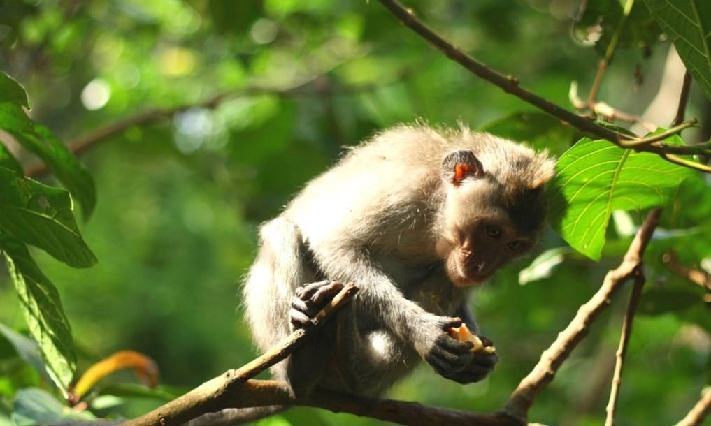 Monkey Forest Ubud 6
