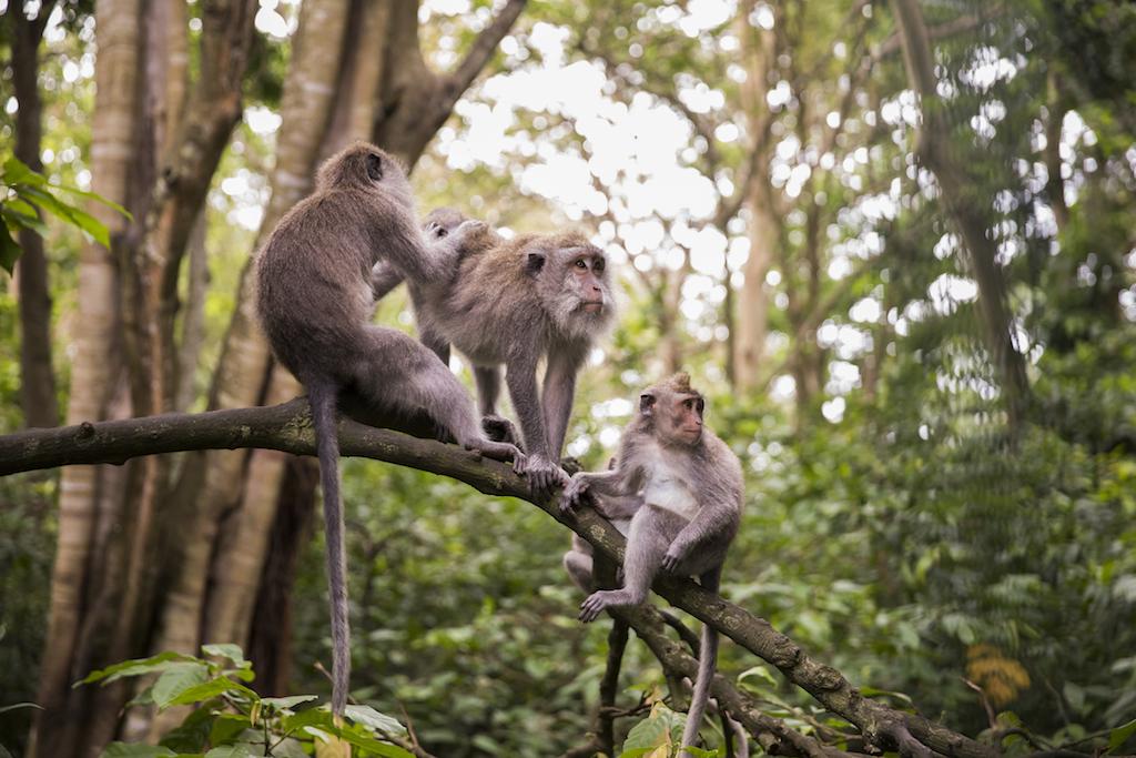 monkey-forest-ubud-reiseroute-bali