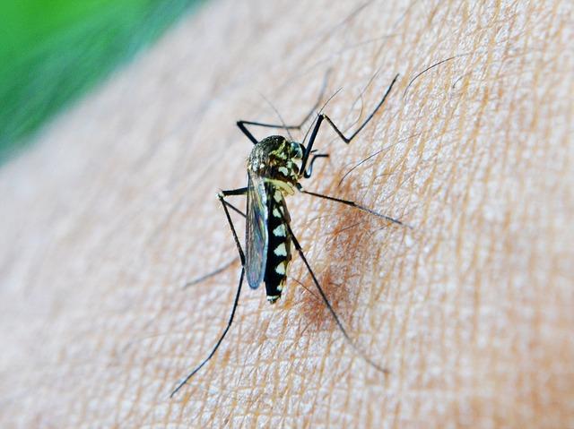 Verdacht auf Malaria? Ruhe bewahren und richtig handeln.