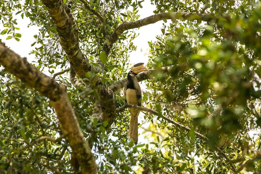 nashornvogel-togian-inseln