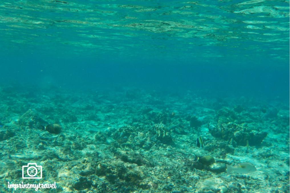 nicht-gili-inseln-korallenriffe-tot