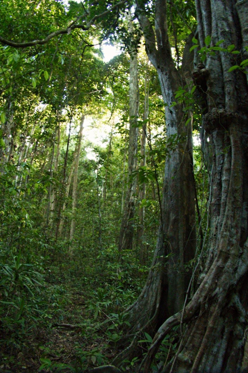 Dschungel auf Garat