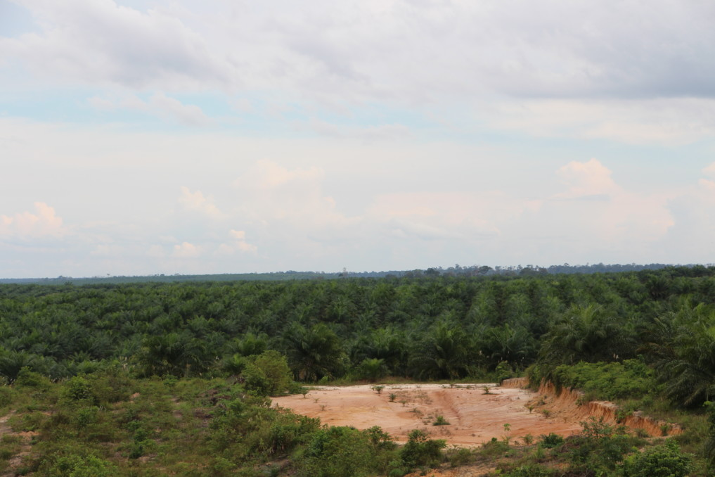 one-million-tree-kalimantan-3