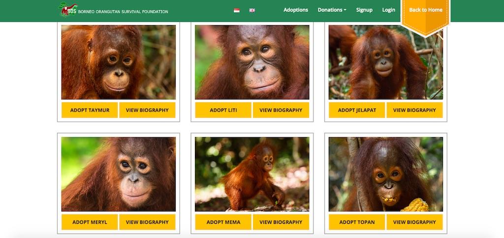 orang-utan-adoptieren