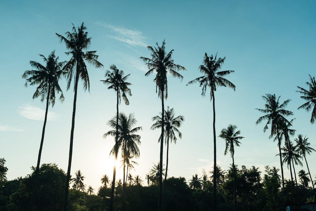 palmen-gili-air