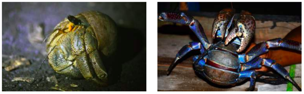 palmendieb-yvonne-peupelmann