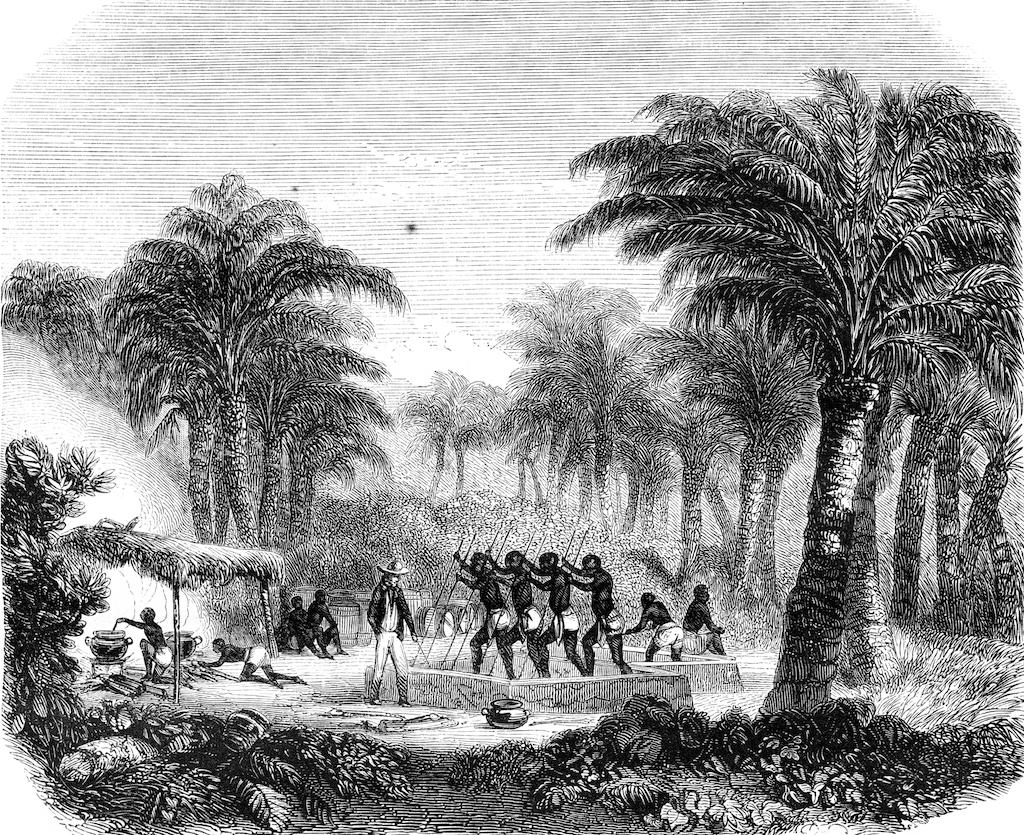 palmöl-geschichte