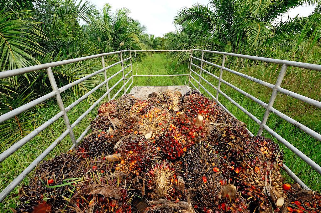 palmoel-indonesien