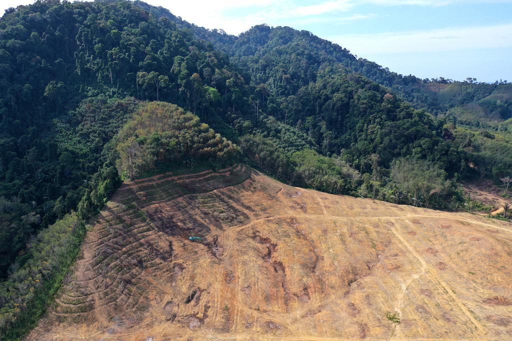 palmoel-rodung-regenwald