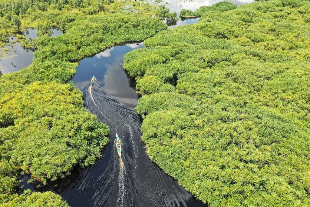 regenwald-indonesien