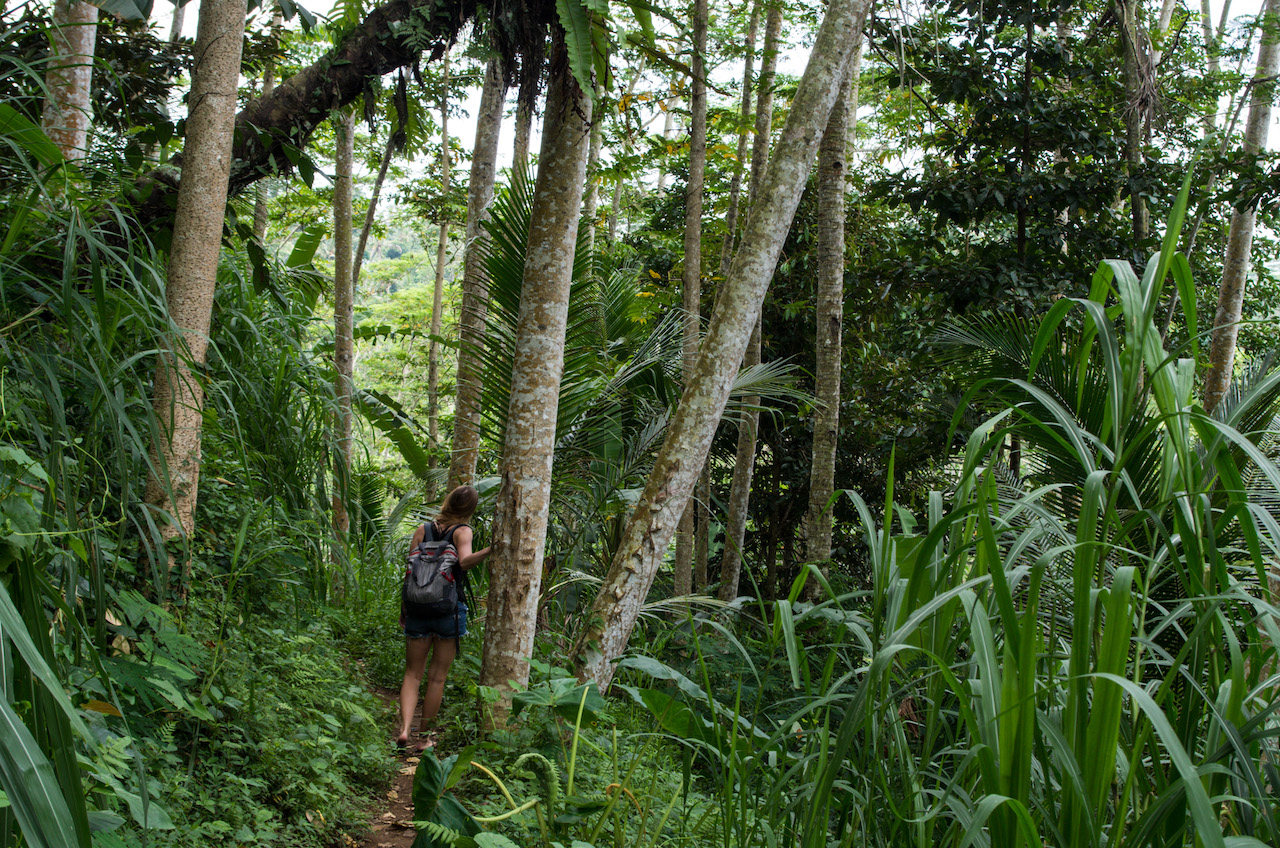 Walk through jungle to Dusun Kuning Waterfall, Bali