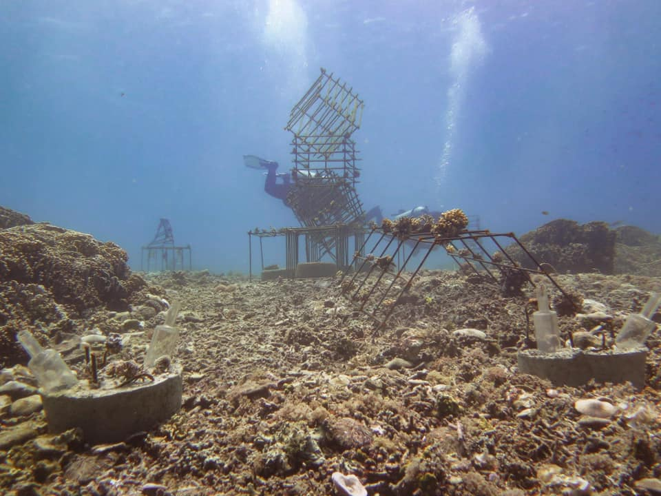 riff-projekt-blue-marlin-dive