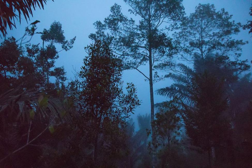 schlangen-python-indonesien-regenwald