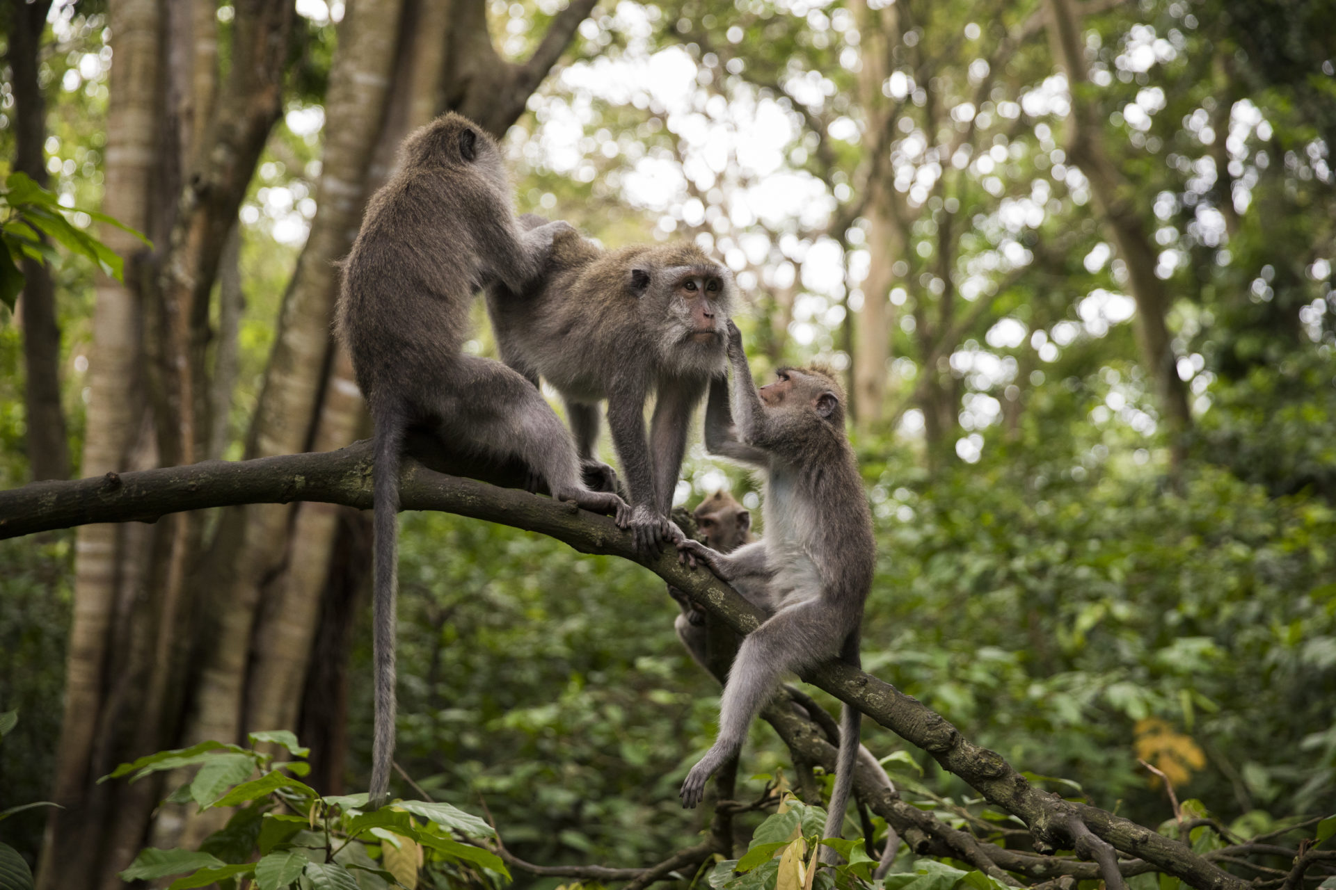 sehenswuerdigkeiten-bali-monkey-forest-ubud