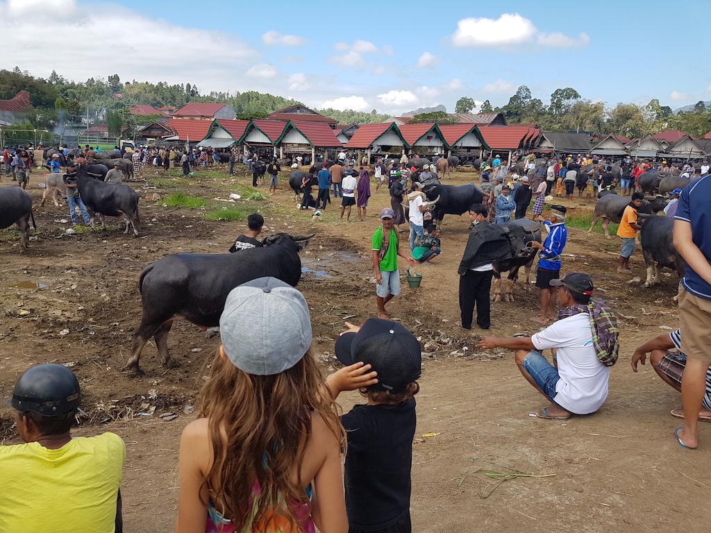 tana-toraja-bueffelmarkt