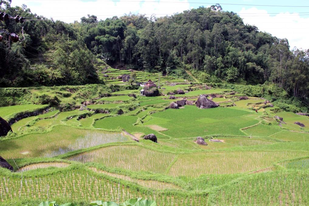 Sulawesi tanatoraja_reisterrassen