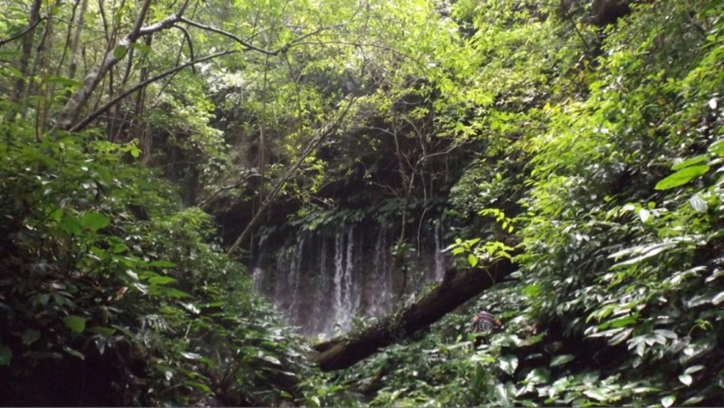 Tangkoko-Batuangus-Duasaudara Naturreservat