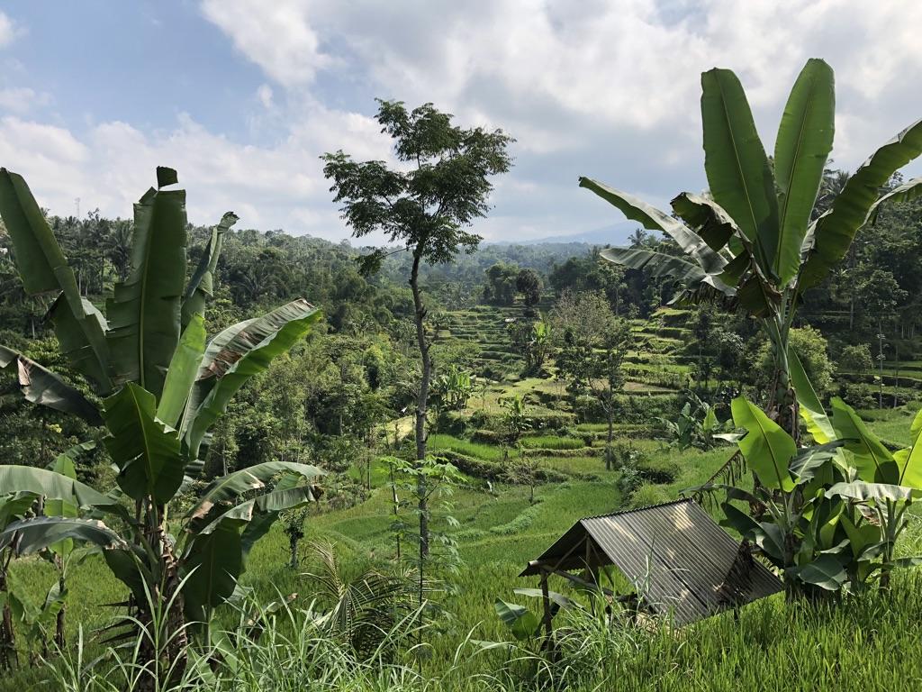 tetebatu-landschaft