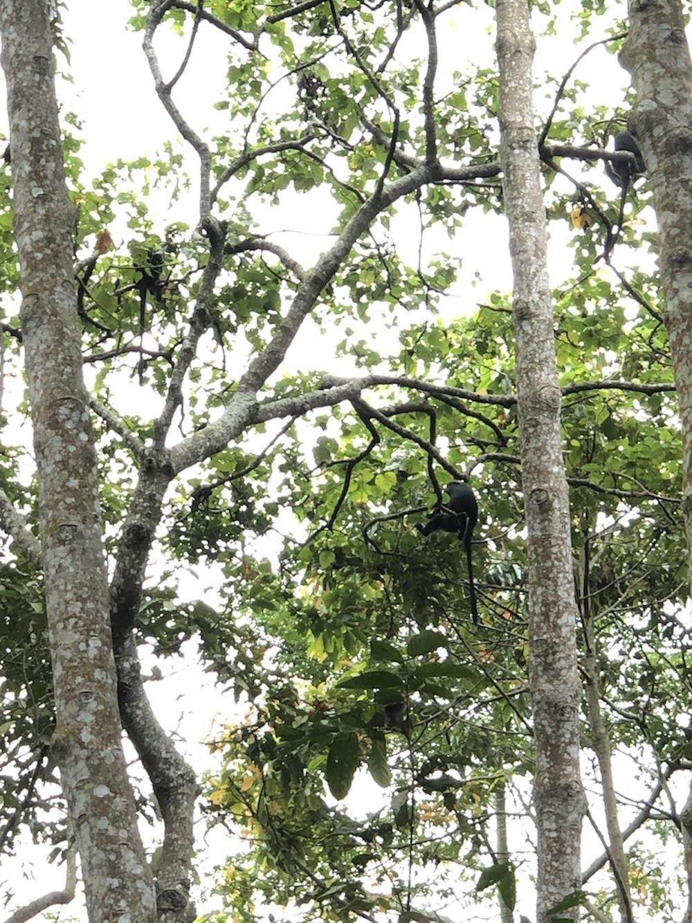 tetebatu-monkey-forest